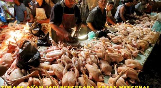 Tukang Ayam Jadi Pengusaha Sejak Mengenal Sbobet Bola